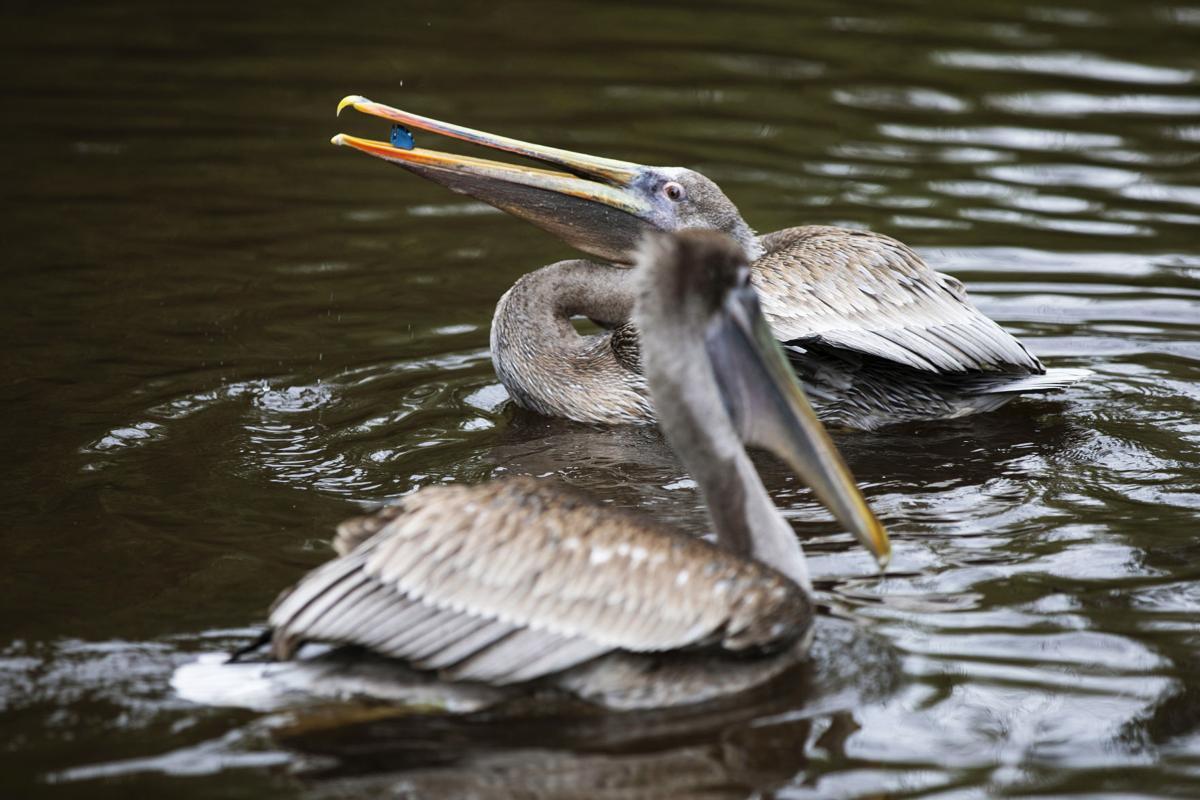 pelican plastic.jpg (copy)