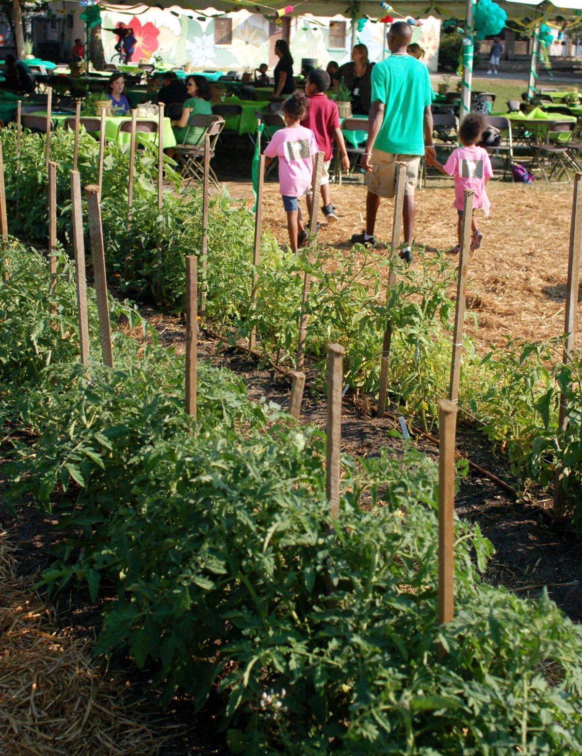 Planting seeds of math