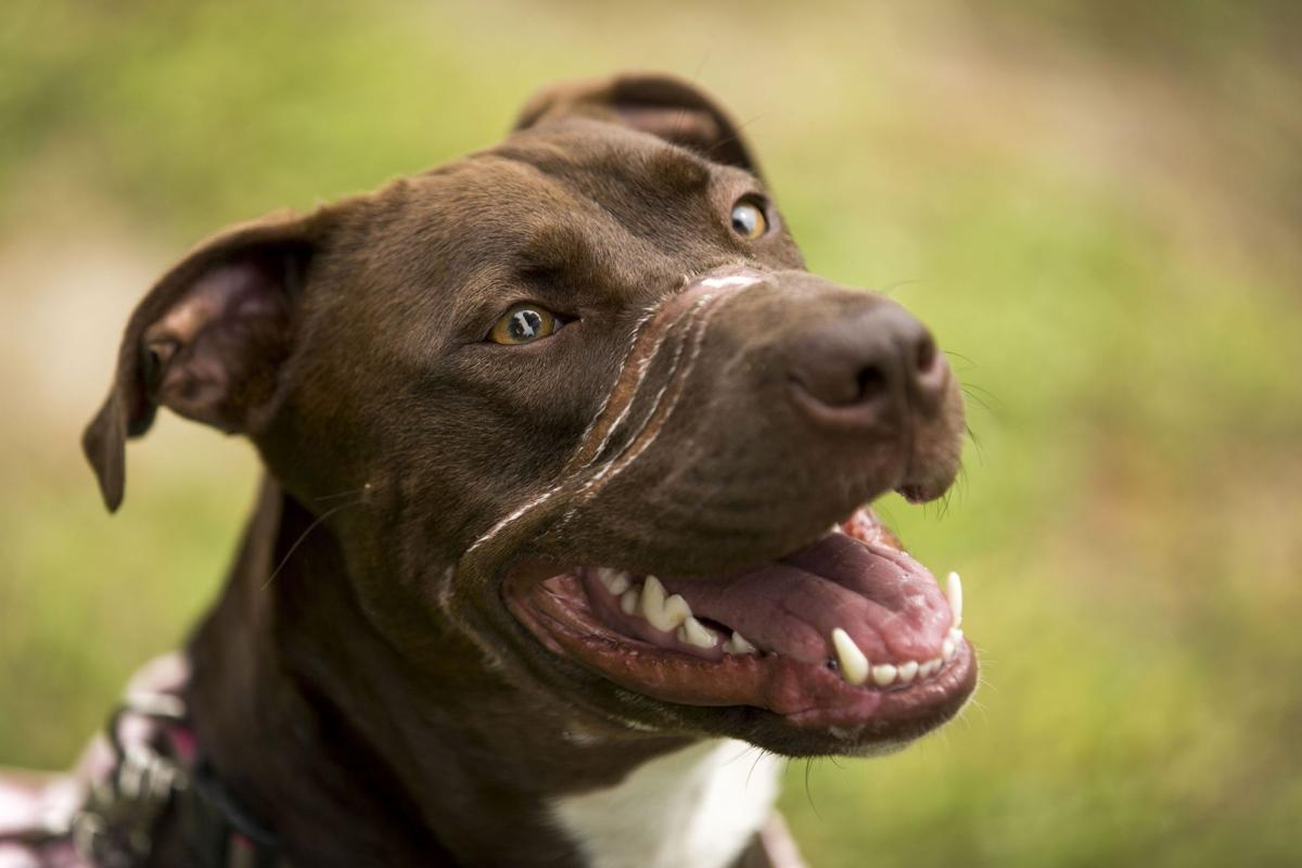 Caitlyn Revealed: DNA test shows mixed ancestry of 'America's Dog'