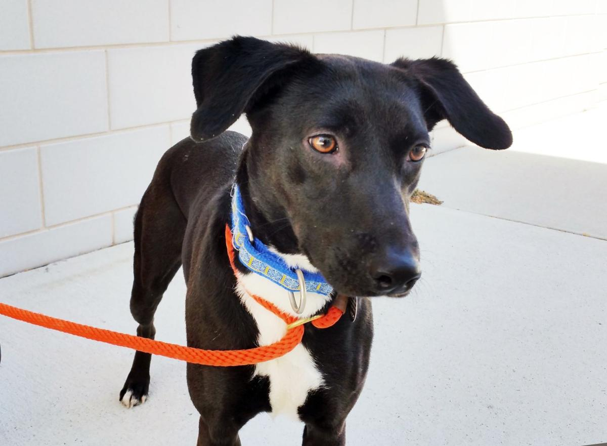 Animal Planet explores program for second chance dogs