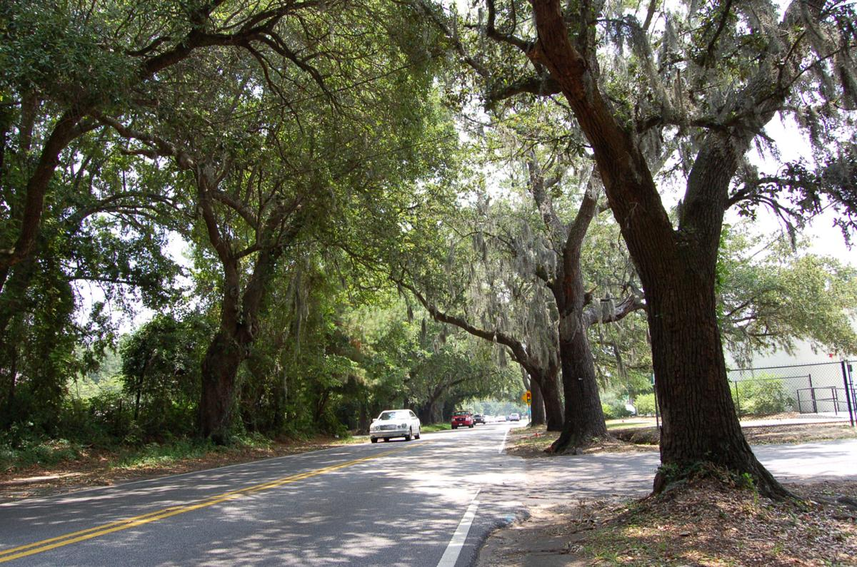 Resistance takes root amid plans to remove grand trees