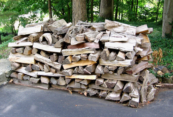 Park service says firewood may house disease, insects