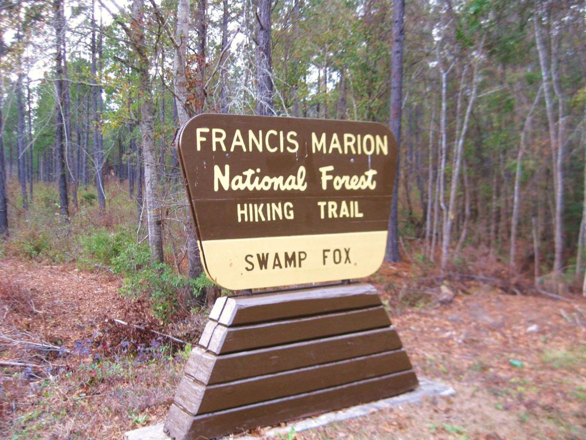 Meetings set to comment on proposed Francis Marion forest management plan