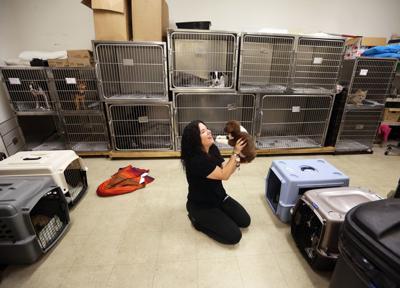 Berkeley County animal shelter (copy)