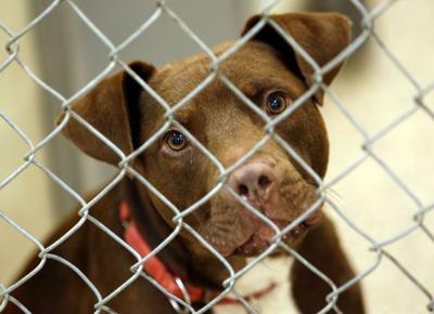 Senate animal shelter battle postponed