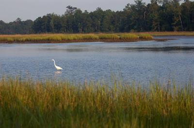 As the green runs out, Charleston County takes stock of preservation successes (copy) (copy)