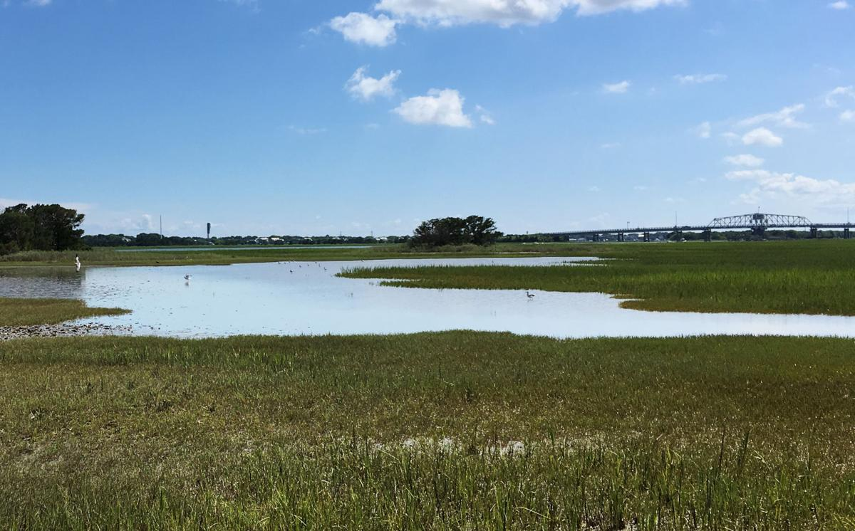 East Cooper marsh, island protected in conservation deal