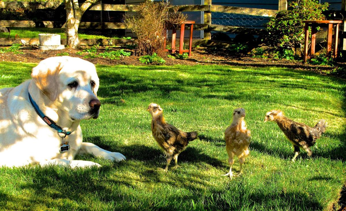 How to garden with your family pets in mind