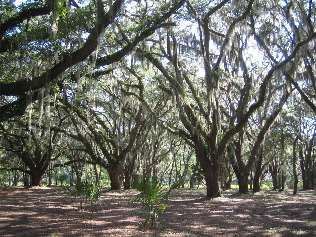 Edisto Island Open Land Trust hosts cocktail party this weekend to raise funds for conservation efforts