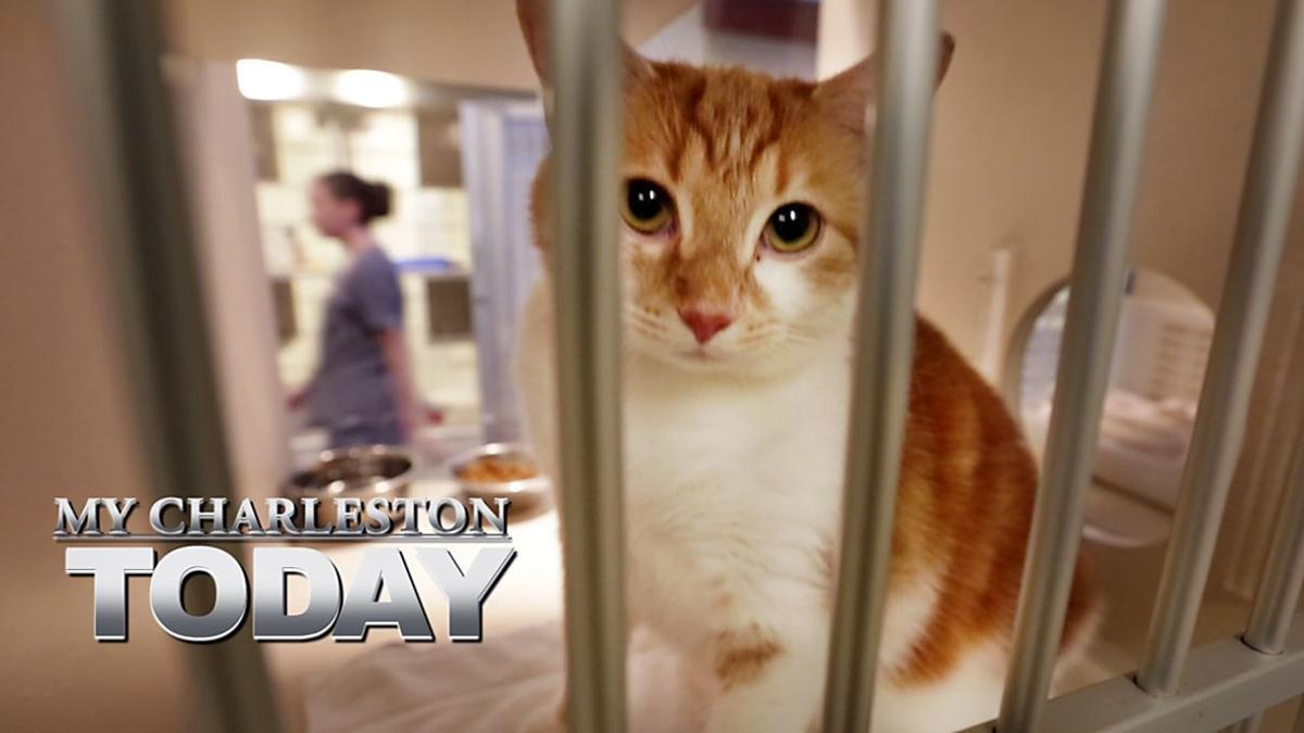 My Charleston Today: Pets who need love, a country music legend, a grape stomp, a beer festival
