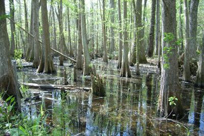 Congress weighs new conservation incentives