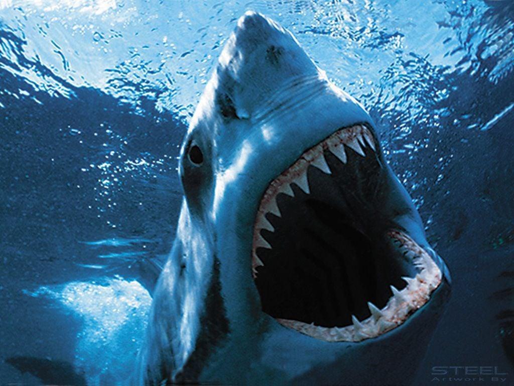 Shark-house - an elusive monster