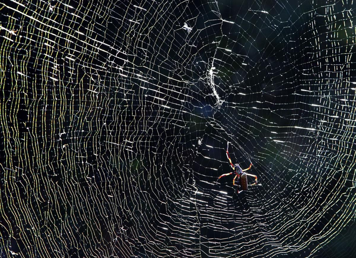 Spiders, bugs and no hurricanes mark the start of fall