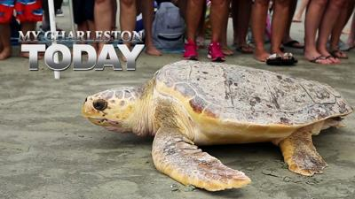My Charleston Today - Hundreds turn out to see sea turtles liberated at Kiawah