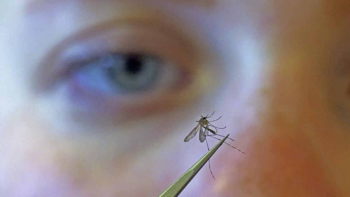 Public Health Mosquito Control (copy)