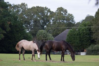 High Horse Stables, riding centers in Charleston area attract equestrian enthusiasts, harness real estate sales