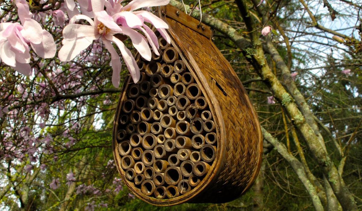 Bee-friendly gardening