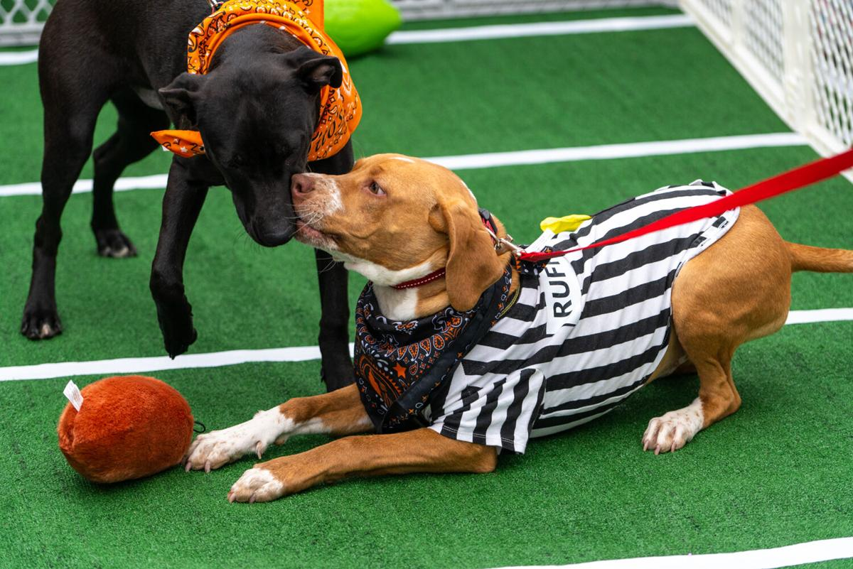 Pup Bowl Towne Centre 2020 two dogs and ball Jeff_Nass_Productions_2_1_2020-33