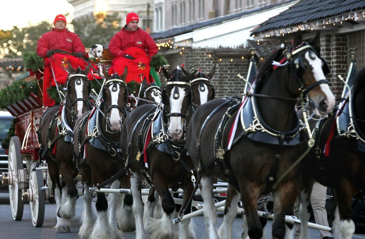 Budweiser Clydesdales prance into town for multiple events next week
