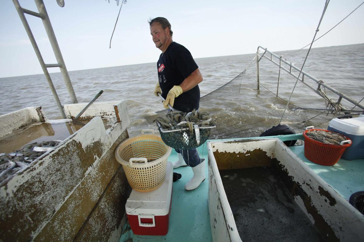 Shrimping begins in the Gulf