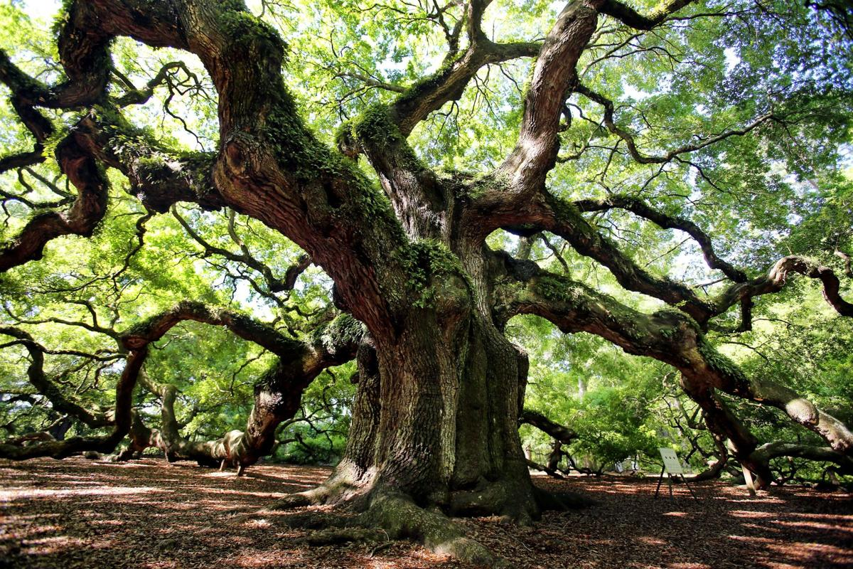 Angel Oak (copy)
