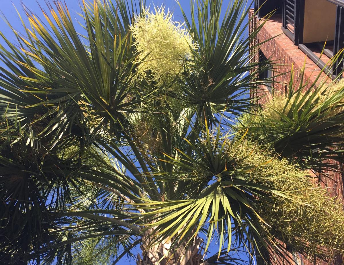 palm trees a lifeline many creatures find shelter food home and