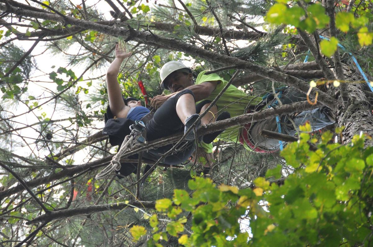 Skydiver isn't quite a ground lander Parachutist rescued after dangling in tree