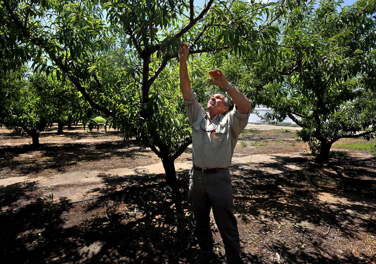 Larry Yonce reach tree.jpg