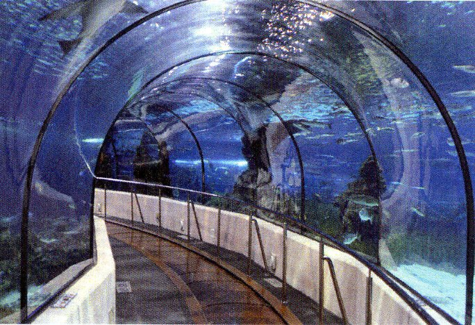 Shark tunnel part of S.C. Aquarium's $68.5 million makeover