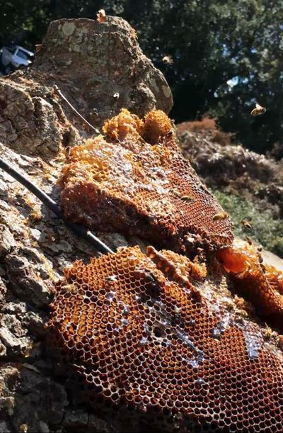 pc-101318-ne-beehive