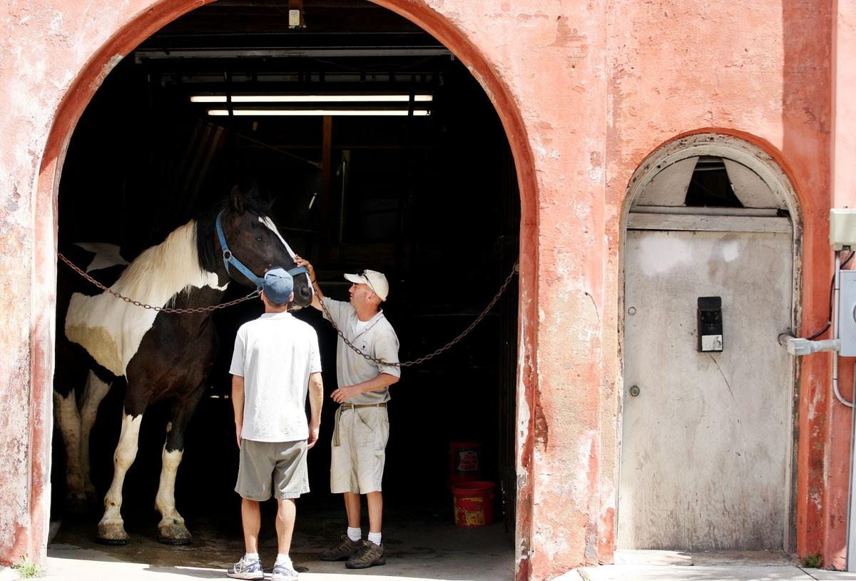 Unstable situation Rule forces company to relocate horses