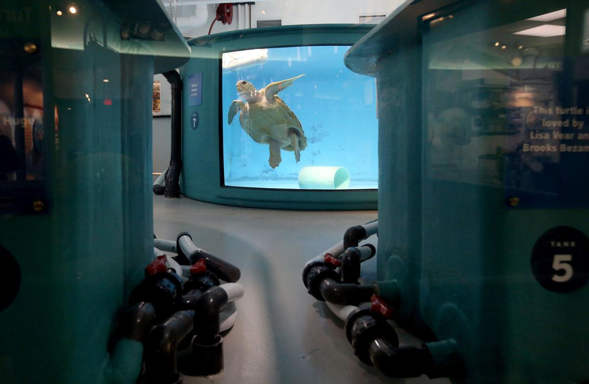 sea turtle hospital swimming.jpg (copy)