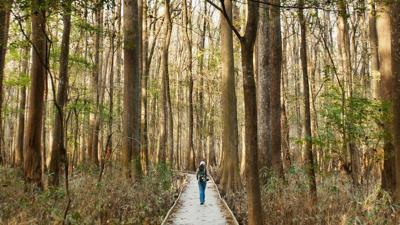 Congaree National Park employees go back to work