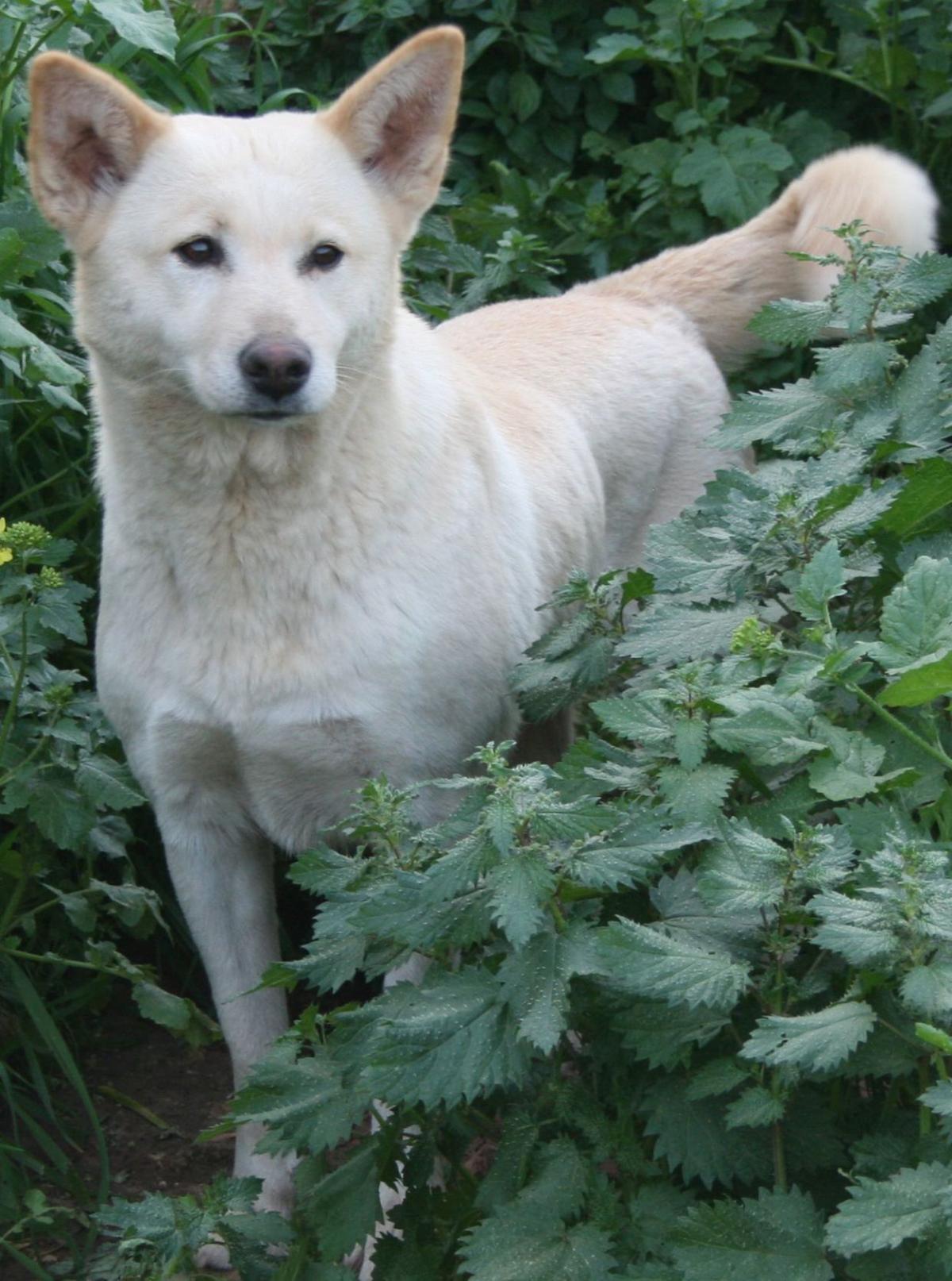 Deciding fate of 'biblical dog'