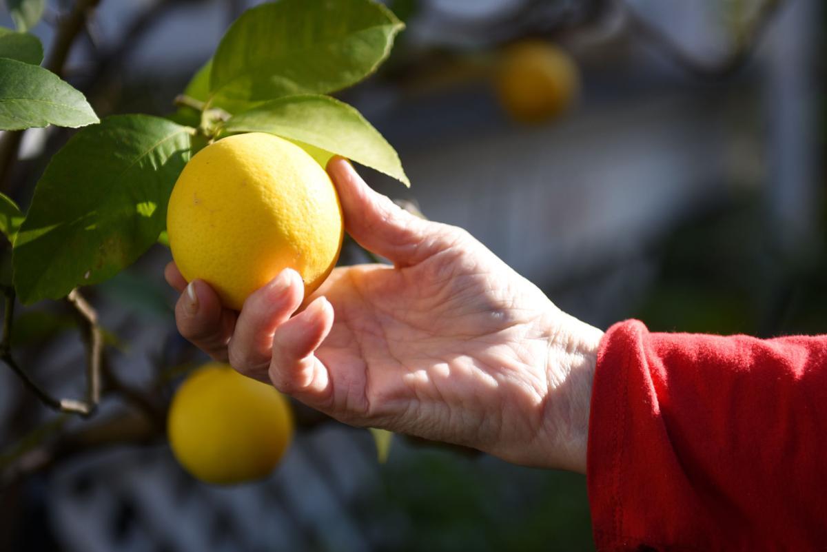 pc-122017-fe-citrus   00001