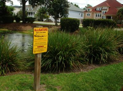 Alligator Sign (copy)