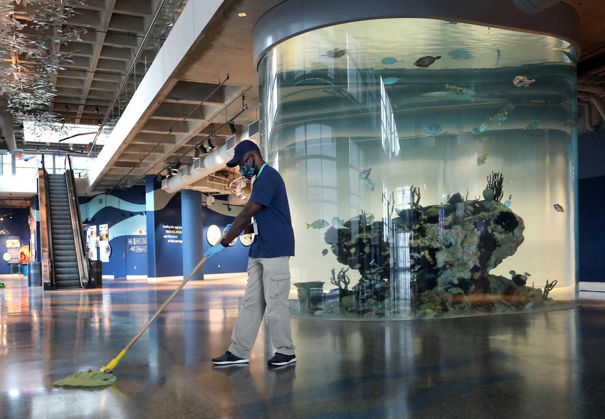 aquarium cleaning.jpg (copy)