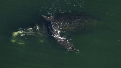 whale (copy)