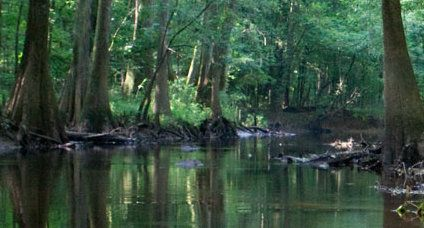 5 rescued after getting lost in Congaree National Park