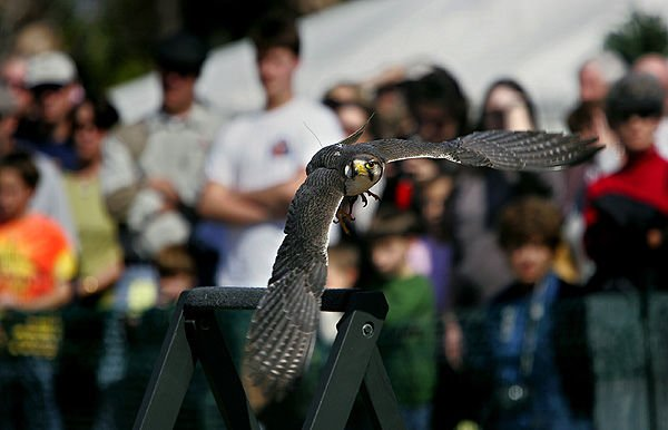 As crowds flock to SEWE, a falcon goes solo — for a time
