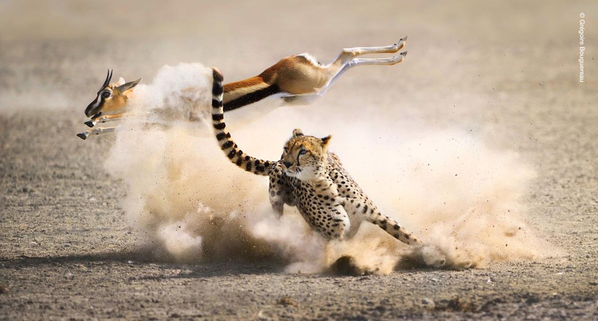 'The Hunt' casts animal predators in new light
