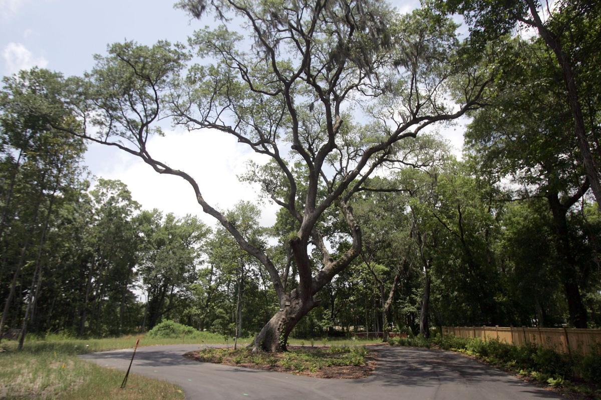 James Island trees prevail