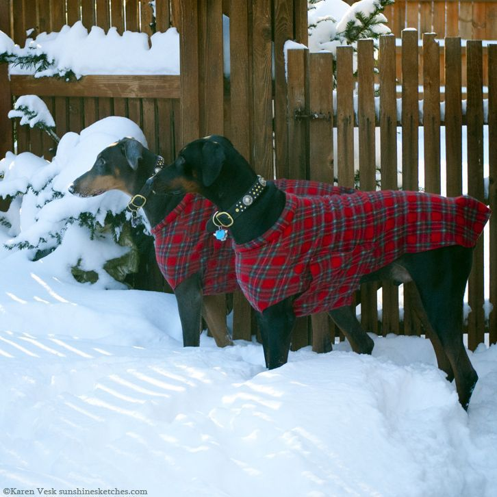 Dog needs a second coat?