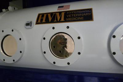 Some ailing pets get hyperbaric chamber treatments