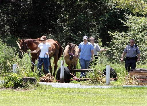 Officials seize horses