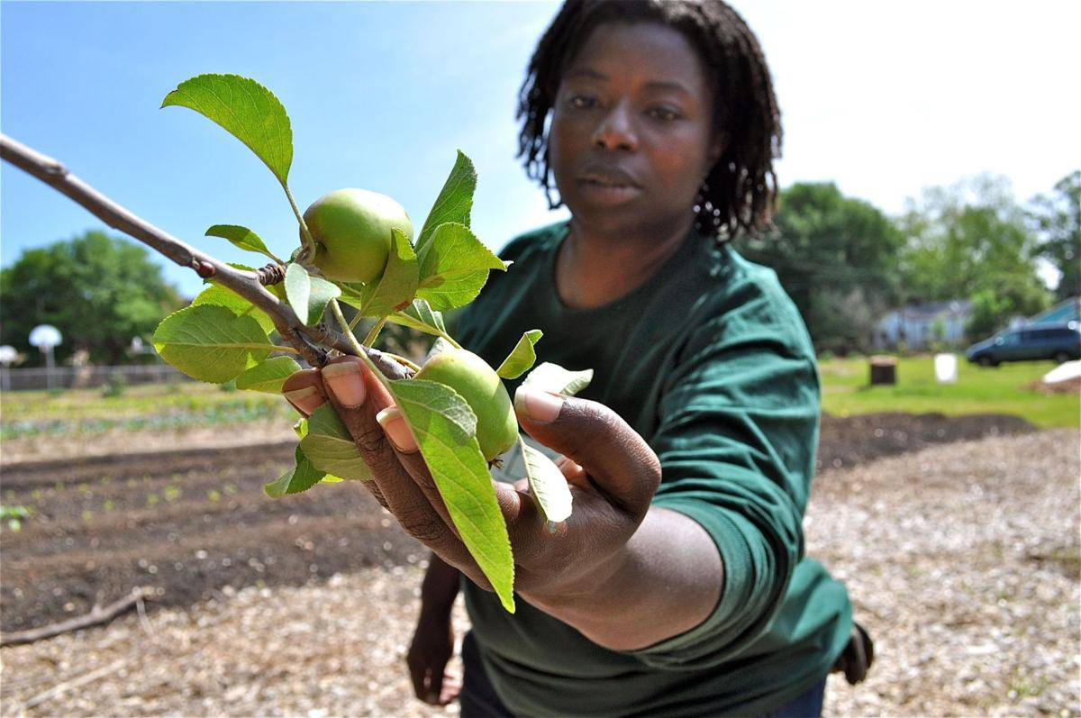 Feeding on 'food forests' Idea of crops raised in public spaces growing