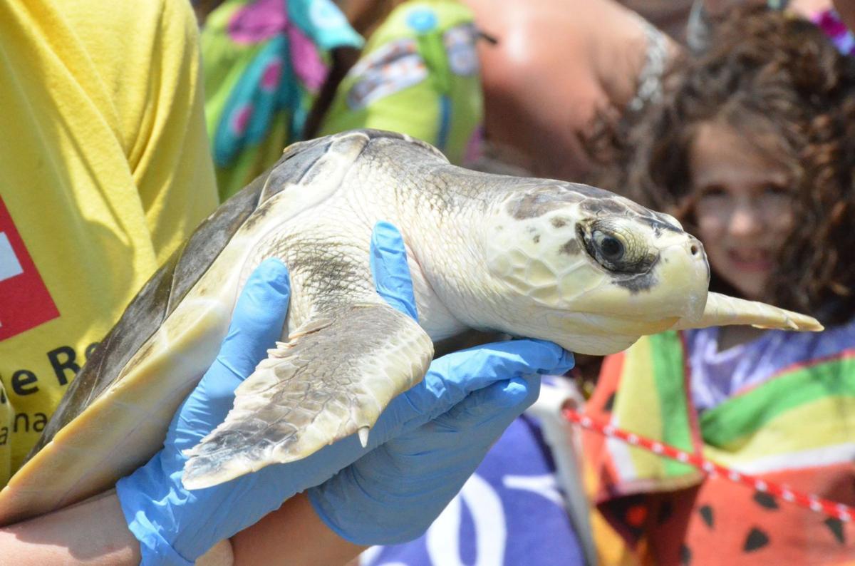 SC Aquarium releases six rehabbed sea turtles