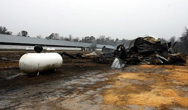 Coop fire kills 15,000 chickens in Dorchester