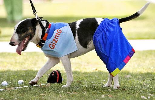 Bull terrier spokesdog for SC tech school
