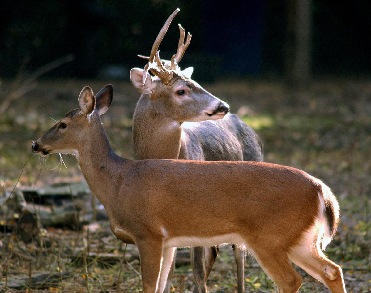 Proposed legislation would limit deer harvest